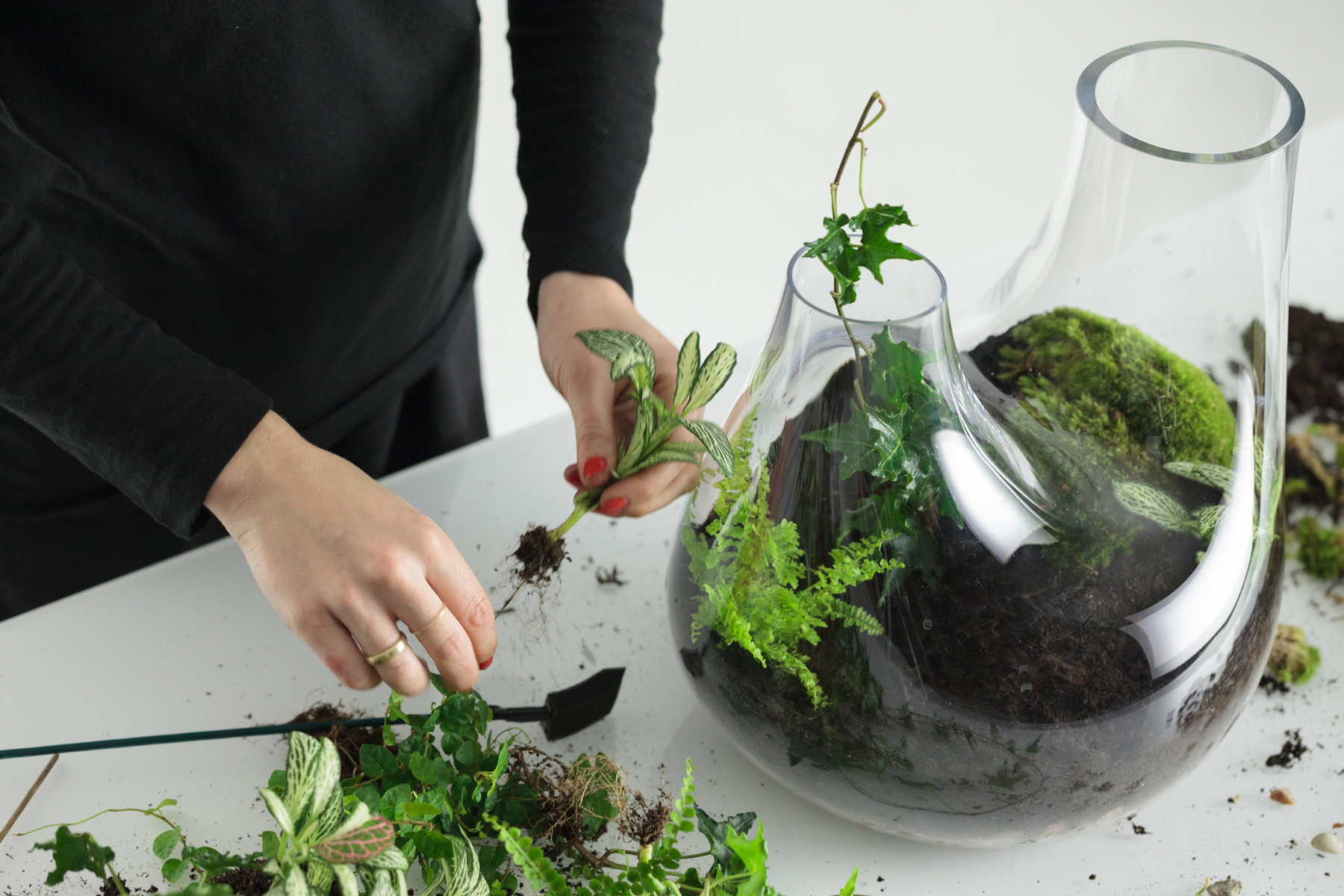 Tom Dixon Plant Terrarium How To